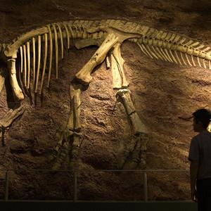 <div class='photo-title'>Full-size dinosaur skeleton!</div>