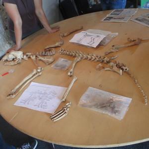 <div class='photo-title'>Exploring animal bones</div><div class='photo-desc'></div>