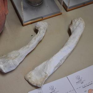 <div class='photo-title'>Modroc bones to investigate rickets</div><div class='photo-desc'></div>